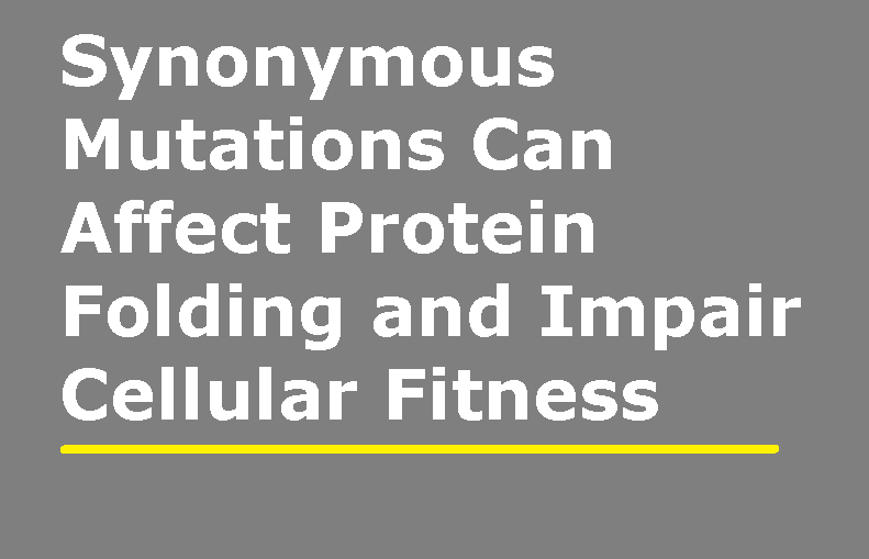 Synonymous Mutations Can Affect Protein Folding And Impair Cellular Fitness